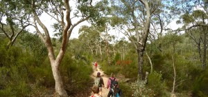 Girraween's dry forest.