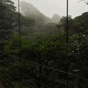 Monteverde Cloud Forest Reserve