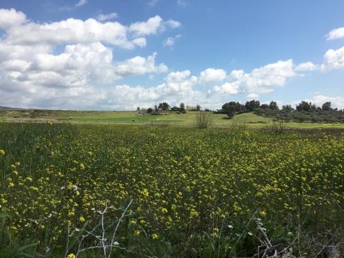 Farmland in northern Morocco