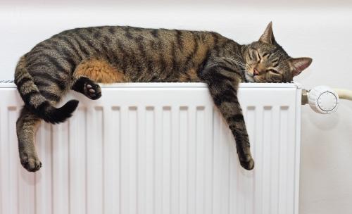 cat radiator